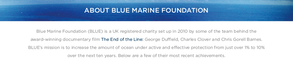 About Blue Marine Foundation